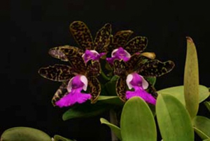 General Orchid Growing Tips